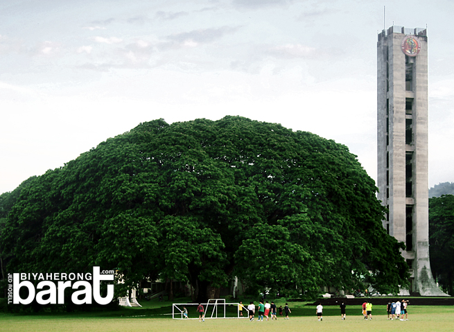 Credits to the owner of this photo. UPLB's famous Fertility Tree.